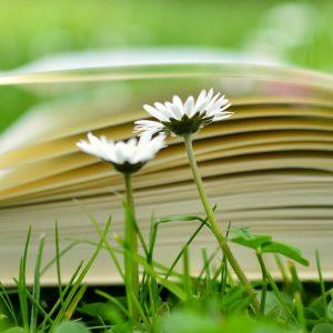 TIPP: Unser Gartenkalender