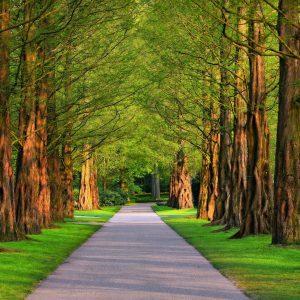 Idee: Salmstrasse mit Bäumen bepflanzen